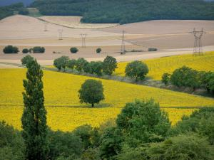 Landscapes of Burgundy - Fields, trees and forest