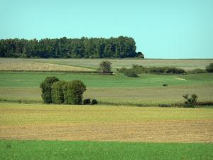 Landscapes of the Charente - Series of fields, line of trees in background