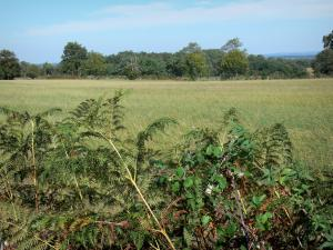 Landscapes of the Charente - Brambles and ferns in foreground, field and trees