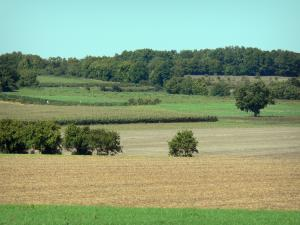 Landscapes of the Charente - Fields and trees