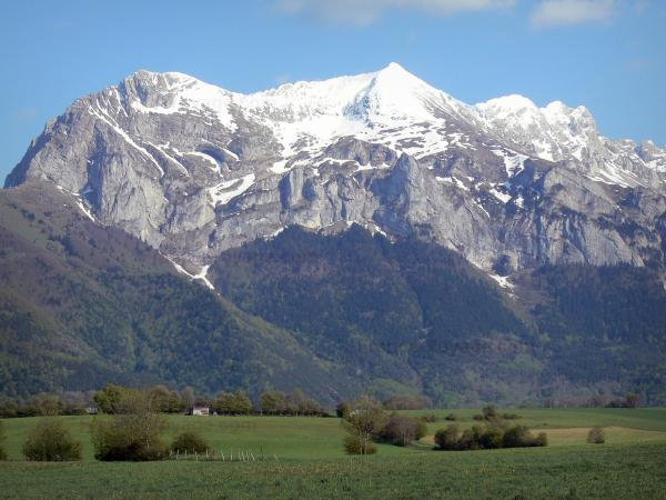 Landscapes of Dauphiné - Trièves: pasture, trees, forest and snow-capped mountain