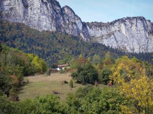 Landscapes of Dauphiné - Forest dominated by the cliffs of the Chartreuse mountain range