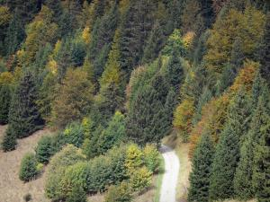 Landscapes of Dauphiné - Chartreuse Regional Nature Park (Chartreuse mountains): Forest road lined with trees and fir