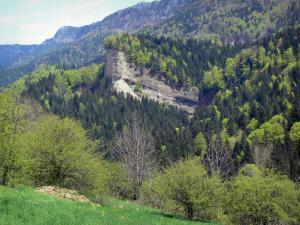 Landscapes of Dauphiné - Vercors Regional Nature Park (Vercors mountains): meadow planted with trees and mountains covered with forest in spring