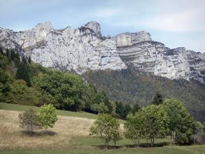 Landscapes of Dauphiné - Meadow planted with trees, forests and cliffs overhanging the place