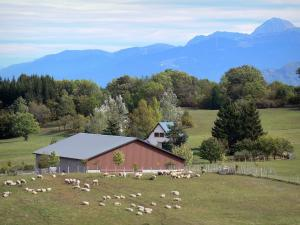 Landscapes of Dauphiné - Farm, herd of sheep in a pasture, trees and mountains