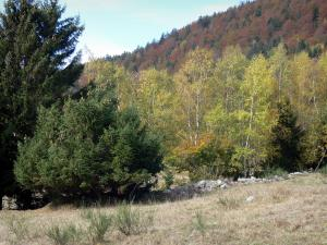 Landscapes of Dauphiné - Grass, trees and forest