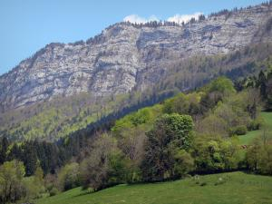 Landscapes of Dauphiné - Vercors Regional Nature Park (Vercors mountains): cliffs dominating forest trees and pastures; in spring
