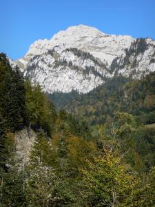 Landscapes of Dauphiné - Regional Natural Park of Chartreuse (Chartreuse mountains): cliffs overlooking the forest