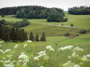 Landscapes of the Doubs - Wild flowers in foreground, prairies and trees