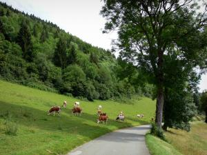 Landscapes of the Doubs - Montbéliardes cows in a meadow, road and trees