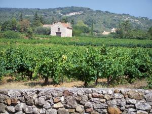 Landscapes of the Gard - Côtes du Rhône vineyard: stone wall, vines, hut and hill planted trees