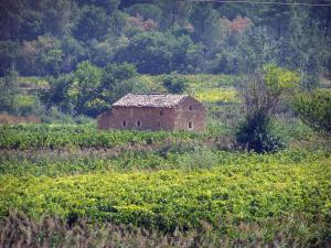 Landscapes of the Gard - Côtes du Rhône: stone hut in the middle of vineyards, trees in the background
