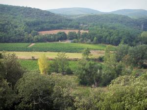 Landscapes of the Gard - Côtes du Rhône vineyard surrounded by trees