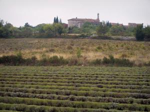 Landscapes of the Gard - Field of lavender, village in the background