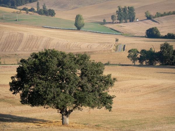 Landscapes of the Gascony - Trees surrounded by fields