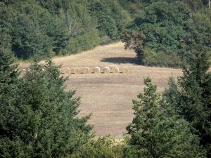 Landscapes of the Gascony - Field surrounded by trees with haystacks