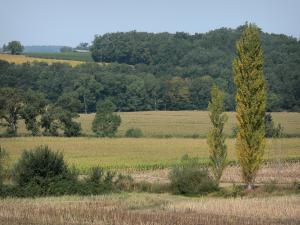 Landscapes of the Gascony - Fields and trees