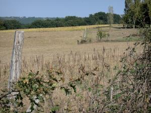 Landscapes of the Gascony - Brambles at the edge of a field