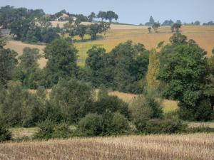 Landscapes of the Gascony - Trees and fields