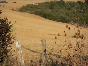 Landscapes of the Gascony - Shrubs and fence of a field