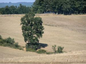 Landscapes of the Gascony - Tree in the middle of a field
