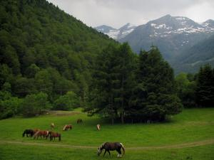 Landscapes of the Haute-Garonne - Horses in a prairie, trees and Pyrenees mountains with some snow
