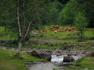 Landscapes of the Haute-Garonne - River with cliffs, cows in a prairie and trees, in the Pyrenees