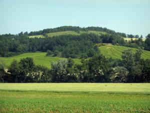 Landscapes of the Haute-Garonne - Fields and trees, in the Lauragais