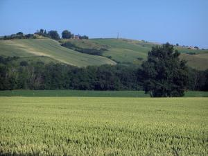 Landscapes of the Haute-Garonne - Fields and trees