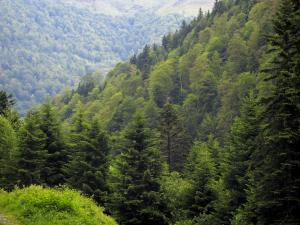 Landscapes of the Haute-Garonne - Forest (trees), in the Pyrenees