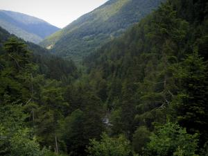 Landscapes of the Haute-Garonne - Forest (trees) and mountains in the Pyrenees