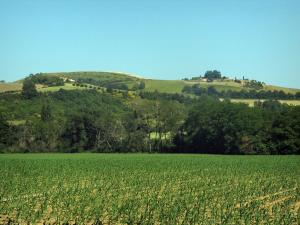Landscapes of the Haute-Garonne - Field and trees