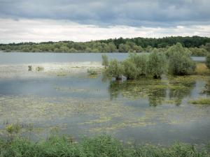 Landscapes of the Haute-Marne - Der-Chantecoq lake, trees in water, and wooded shore