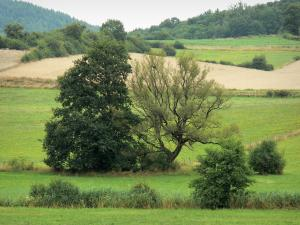 Landscapes of the Haute-Marne - Trees surrounded by meadows