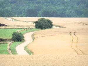 Landscapes of the Haute-Marne - Country road lined with fields