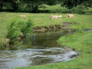 Landscapes of the Haute-Marne - Cows in a meadow beside a small river