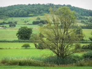 Landscapes of the Haute-Marne - Meadows, trees and vegetation