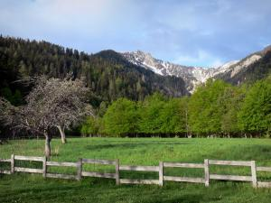 Landscapes of the Hautes-Alpes - Meadow, wooden fence, trees, Boscodon forest and mountain