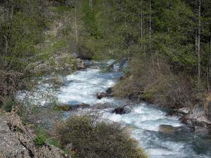 Landscapes of the Hautes-Alpes - Freissinières valley: Biaysse (Biaisse) torrent edged with trees and shrubs; in the Écrins National Nature Park