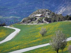 Landscapes of the Hautes-Alpes - Road lined with flower-filled prairies
