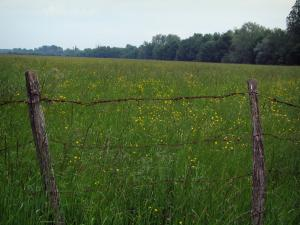 Landscapes of the Indre-et-Loire - Fence in foreground, field dotted with wild flowers and trees in background