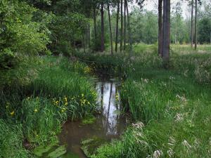 Landscapes of the Indre-et-Loire - Small river lined with wild flowers, flora and trees