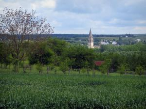 Landscapes of the Indre-et-Loire - Corns field, trees, church bell tower and cloudy sky