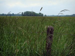 Landscapes of the Indre-et-Loire - Fence and flora in a field