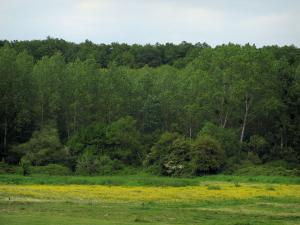 Landscapes of the Indre-et-Loire - Meadow dotted with wild flowers and trees of a forest