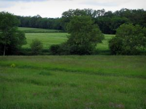 Landscapes of the Indre-et-Loire - Meadows and trees