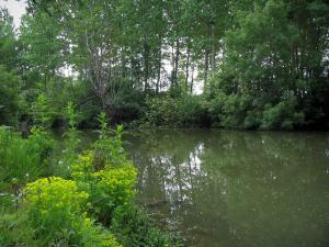 Landscapes of the Indre-et-Loire - Vegetation, river and trees