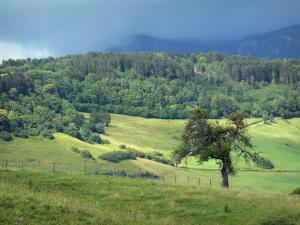 Landscapes of Jura - Meadows, trees, forest and mountains in background