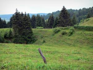 Landscapes of Jura - Fence of a meadow and spruces (trees); in the Upper Jura Regional Nature Park